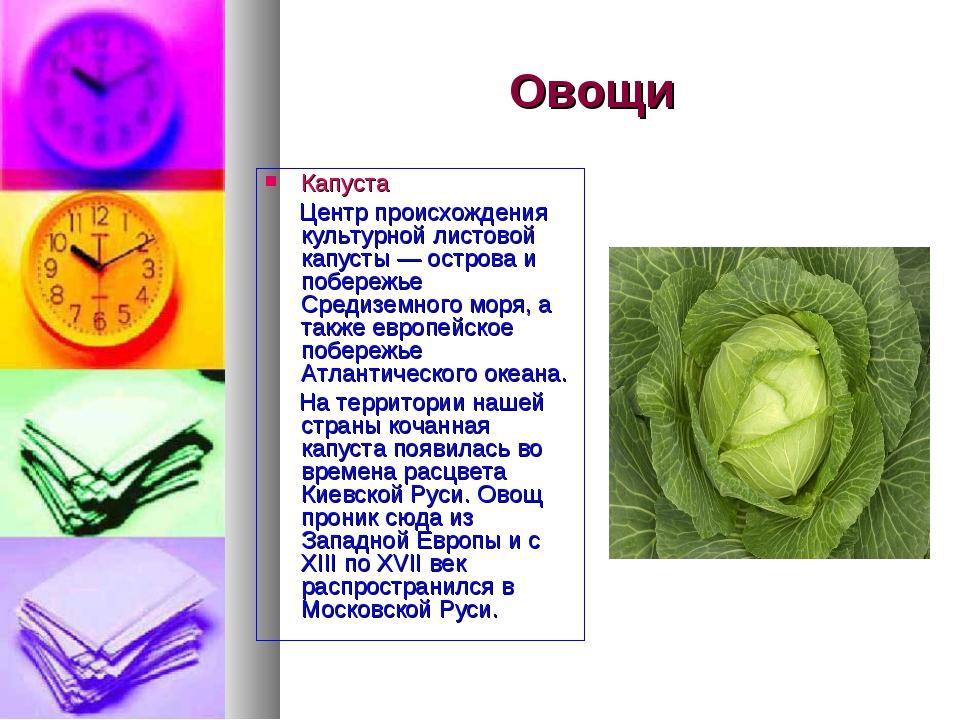 Овощи Капуста Центр происхождения культурной листовой капусты — острова и поб...