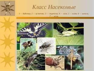 Класс Насекомые 1 — бабочка; 2 — кузнечик; 3 — стрекоза; 4 — жук; 5 — клоп;
