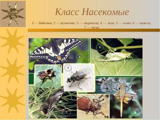 Класс Насекомые 1 — бабочка; 2 — кузнечик; 3 — стрекоза; 4 — жук; 5 — клоп;...