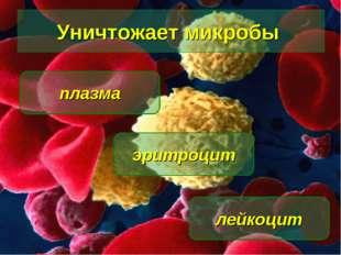Уничтожает микробы лейкоцит эритроцит плазма