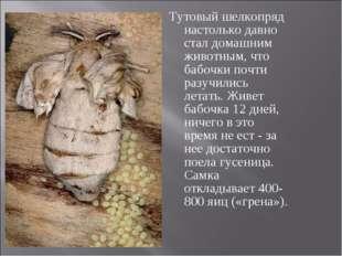 Тутовый шелкопряд настолько давно стал домашним животным, что бабочки почти р