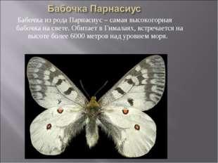 Бабочка из рода Парнасиус – самая высокогорная бабочка на свете. Обитает в Ги