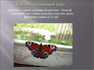 Бабочка с самым лучшим обонянием – Ночной павлиний глаз. Самец способен ощути