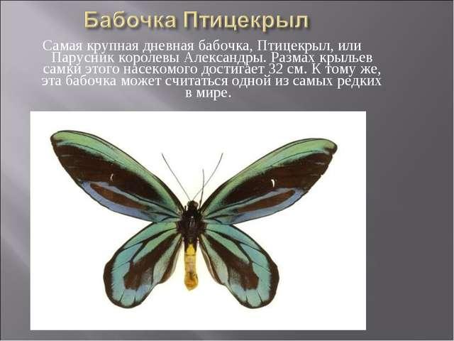 Самая крупная дневная бабочка, Птицекрыл, или Парусник королевы Александры. Р...