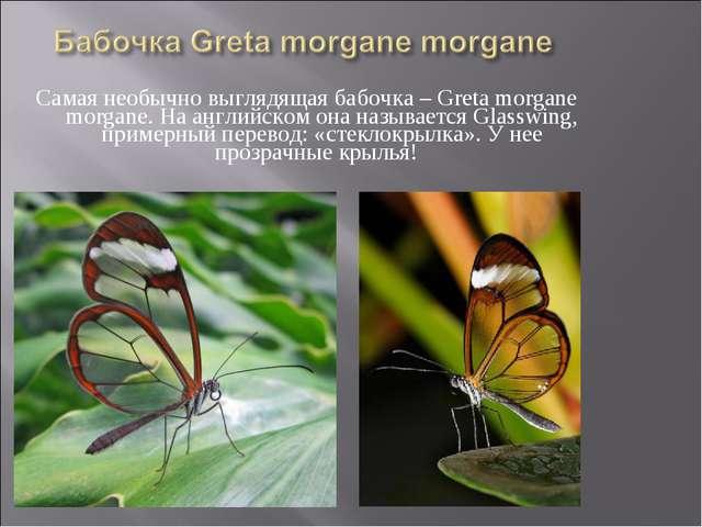Самая необычно выглядящая бабочка – Greta morgane morgane. На английском она...
