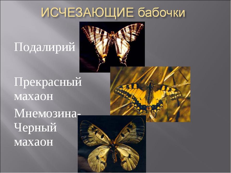 Подалирий Прекрасный махаон Мнемозина- Черный махаон