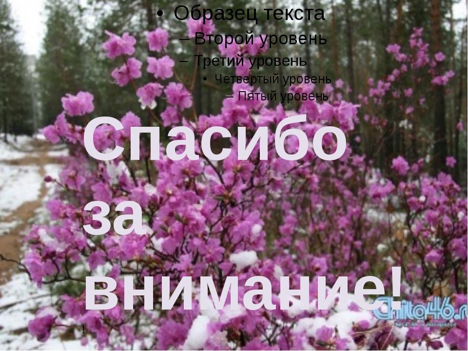 Спасибо за внимание!! MKSHOME: Автор: Истомина Н.П .