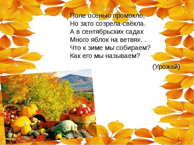 Поле осенью промокло, Но зато созрела свёкла. А в сентябрьских садах Много яб...