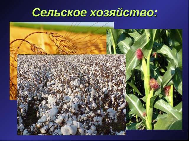 Сельское хозяйство: