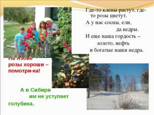 На Азове розы хороши – помотри-ка! А в Сибири им не уступает голубика. Где-то