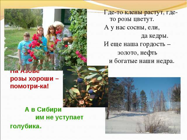 На Азове розы хороши – помотри-ка! А в Сибири им не уступает голубика. Где-то...