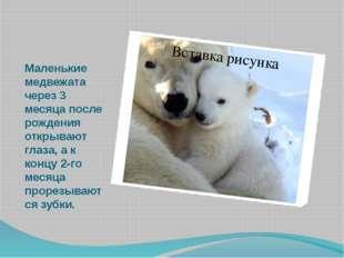 Маленькие медвежата через 3 месяца после рождения открывают глаза, а к концу