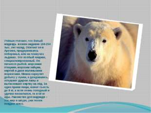 Учёные считают, что белый медведь возник недавно 100-250 тыс. лет назад. Обит