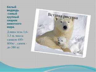 Белый медведь -самый крупный хищник животного мира. Длина тела 1,6-3,3 м, мас