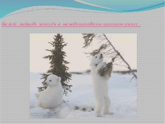 Белый медведь занесён в международную красную книгу .