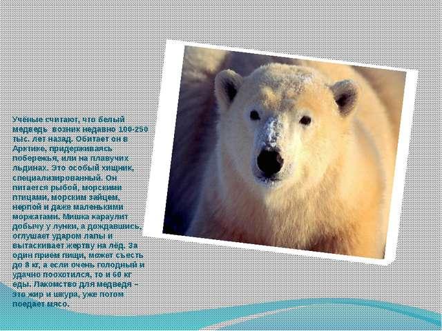 Учёные считают, что белый медведь возник недавно 100-250 тыс. лет назад. Обит...