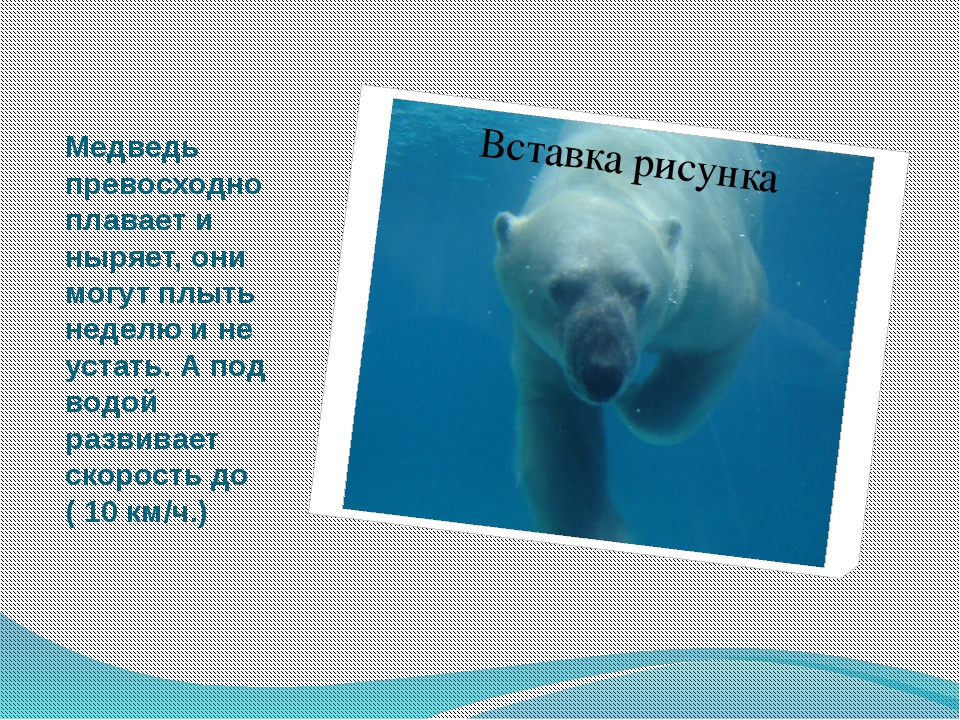Медведь превосходно плавает и ныряет, они могут плыть неделю и не устать. А п...