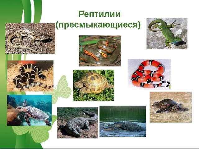 Рептилии (пресмыкающиеся)