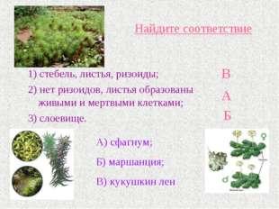 Найдите соответствие 1) стебель, листья, ризоиды; 2) нет ризоидов, листья обр