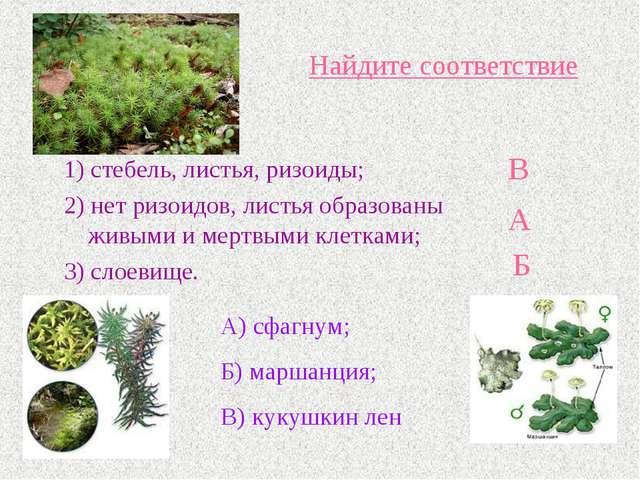 Найдите соответствие 1) стебель, листья, ризоиды; 2) нет ризоидов, листья обр...