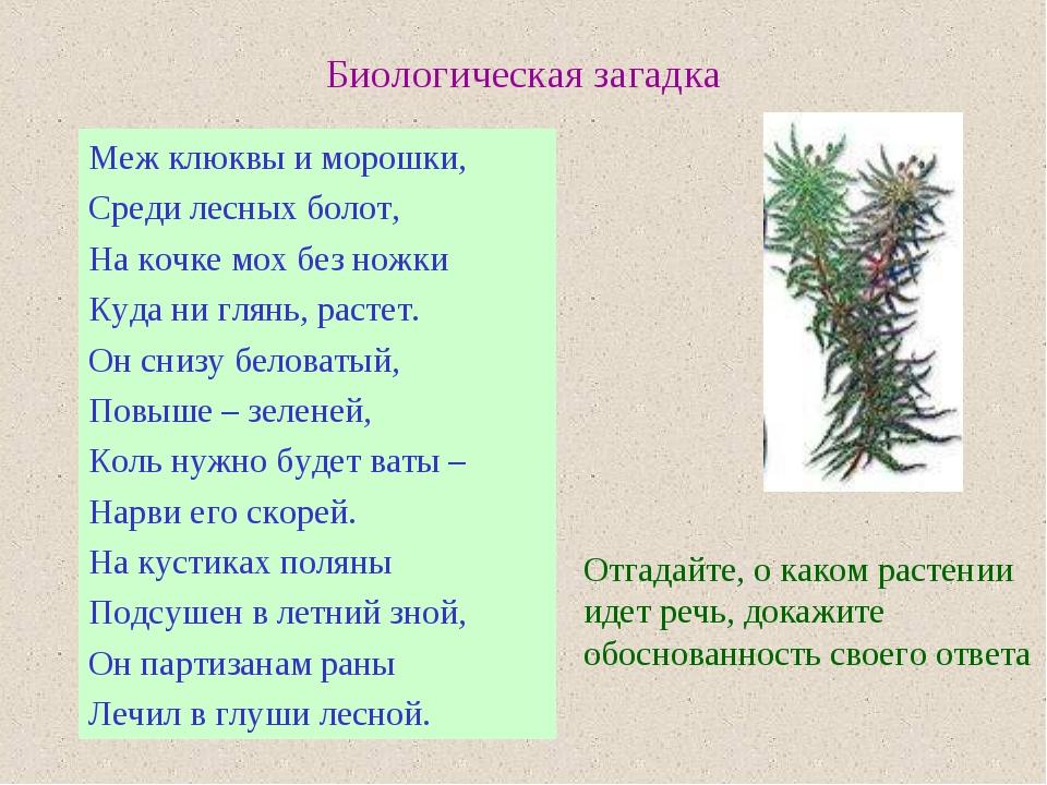 Биологическая загадка Меж клюквы и морошки, Среди лесных болот, На кочке мох...