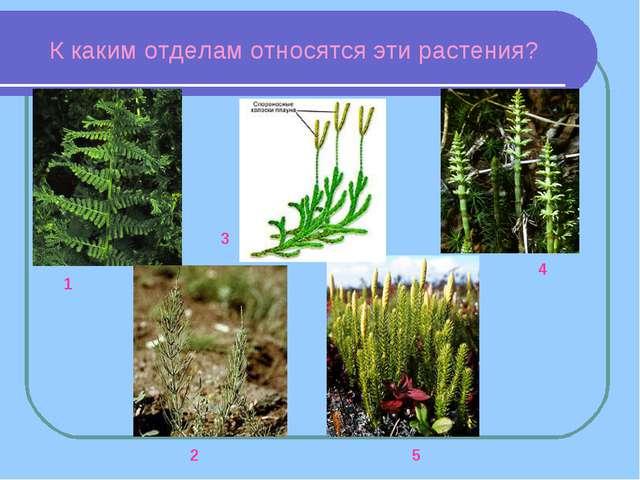 К каким отделам относятся эти растения? 1 2 3 4 5