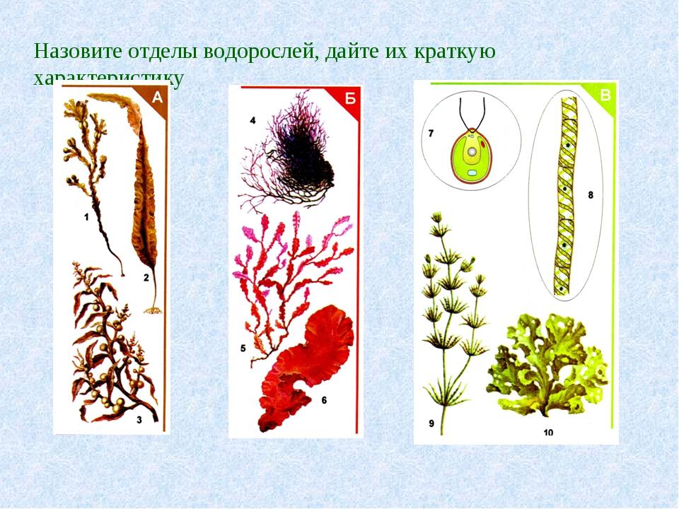 Назовите отделы водорослей, дайте их краткую характеристику