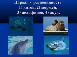 Нарвал - разновидность 1) китов, 2) моржей, 3) дельфинов, 4) акул.