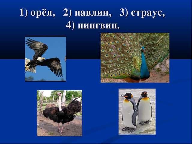 1) орёл, 2) павлин, 3) страус, 4) пингвин.