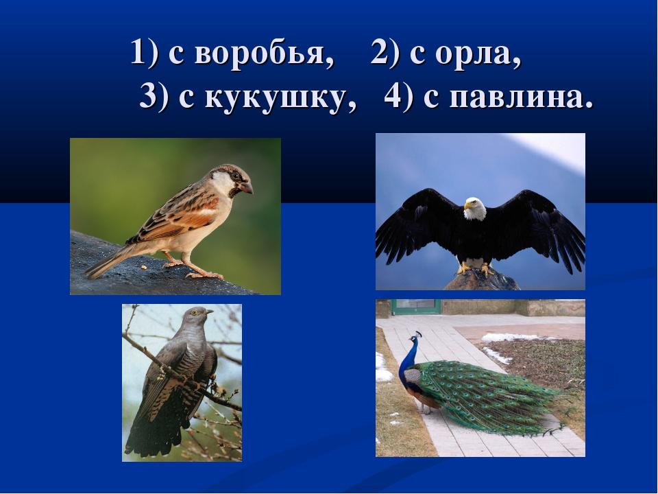 1) с воробья, 2) с орла, 3) с кукушку, 4) с павлина.