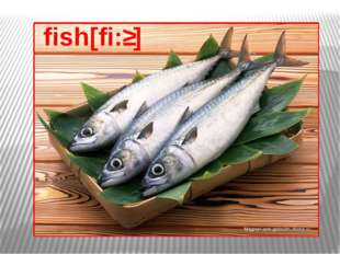 fish[fi:ʃ]