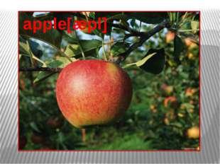 apple[æpl]