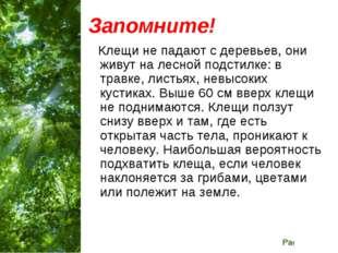Запомните! Клещи не падают с деревьев, они живут на лесной подстилке: в травк
