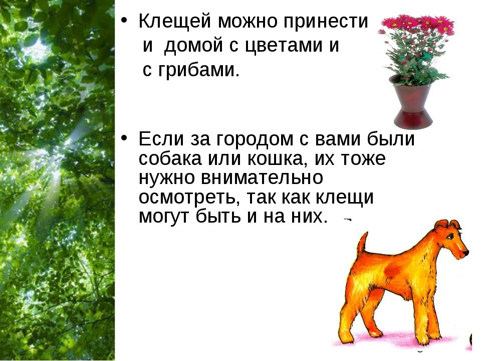 Клещей можно принести и домой с цветами и с грибами. Если за городом с вами б...