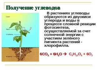 Получение углеводов В растениях углеводы образуются из двуокиси углерода и во