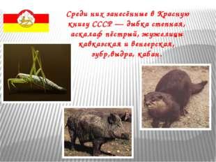 Среди них занесённые в Красную книгу СССР — дыбка степная, аскалаф пёстрый,