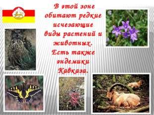 В этой зоне обитают редкие исчезающие виды растений и животных. Есть также э