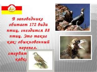 В заповеднике обитает 172 вида птиц, гнездится 88 птиц. Это такие как: обыкно