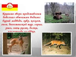 Крупные звери представлены довольно обычными видами: бурый медведь, зубр, кос