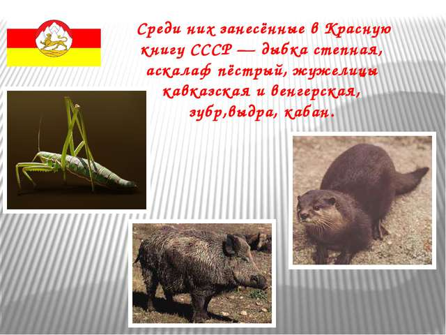 Среди них занесённые в Красную книгу СССР — дыбка степная, аскалаф пёстрый,...