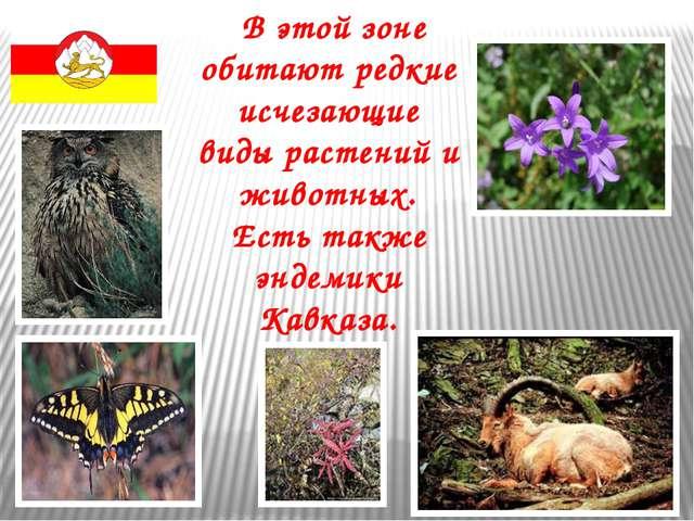 В этой зоне обитают редкие исчезающие виды растений и животных. Есть также э...