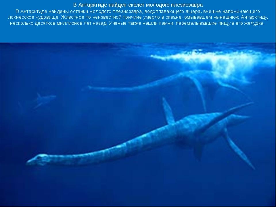 Ученые обнаружили следы удивительных существ, населявших Антарктиду 250 млн...