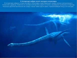Ученые обнаружили следы удивительных существ, населявших Антарктиду 250 млн