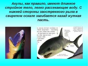 Акулы, как правило, имеют длинное стройное тело, легко рассекающее воду. С ни