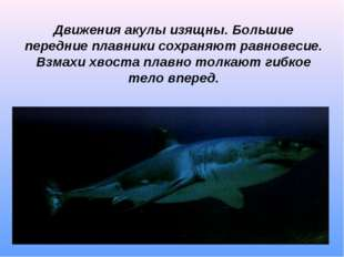 Движения акулы изящны. Большие передние плавники сохраняют равновесие. Взмахи