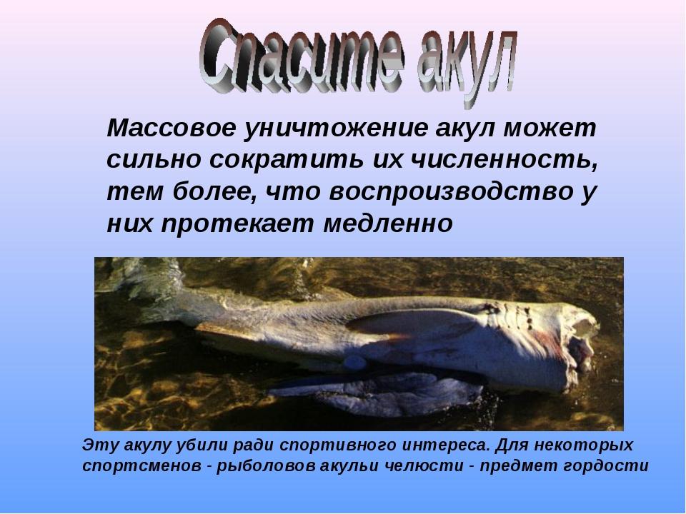 Массовое уничтожение акул может сильно сократить их численность, тем более, ч...
