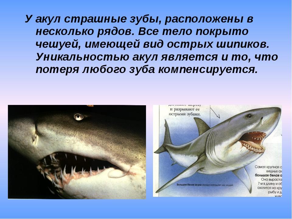 У акул страшные зубы, расположены в несколько рядов. Все тело покрыто чешуей...