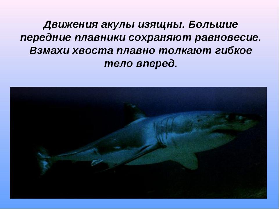 Движения акулы изящны. Большие передние плавники сохраняют равновесие. Взмахи...