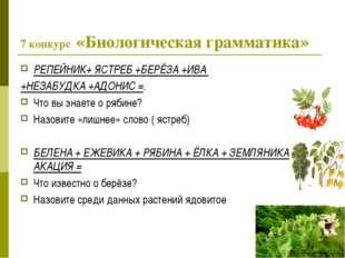7 конкурс «Биологическая грамматика» РЕПЕЙНИК+ ЯСТРЕБ +БЕРЁЗА +ИВА +НЕЗАБУДКА