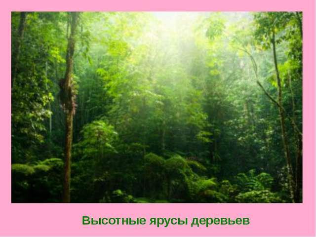 Высотные ярусы деревьев